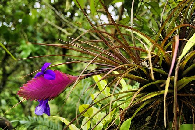 exotická květina