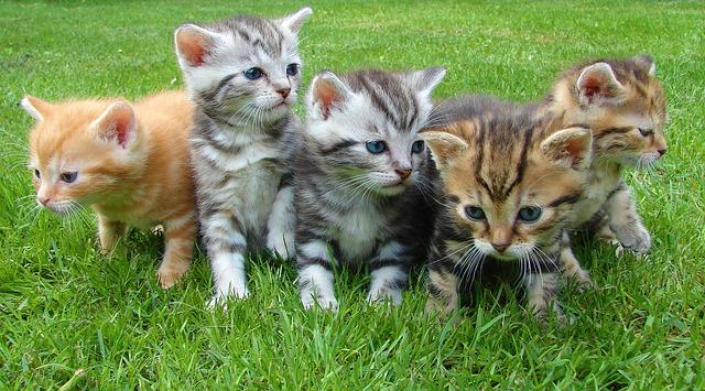 roztomilá koťata